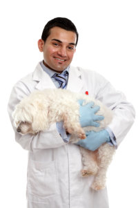 Smiling veterinarian carrying a pet dog in his arms